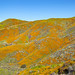 Walker Canyon Ecological Reserve