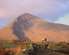 Dugort (zanettifoto) Tags: wiese mayo fujichromevelvia50 herbst klippen berg morgen irland sonnenaufgang hauspferdequuscaballus morgensonne wolkenhimmel tetenalcolortece6 dugort