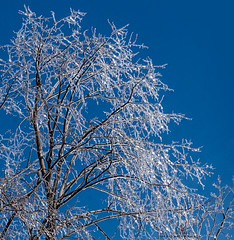 Panasonic Lumix GH4 + circular polarizing filter (marianna armata) Tags: ice tree frozen winter cold iced branches blue sky spring montreal quebec canada