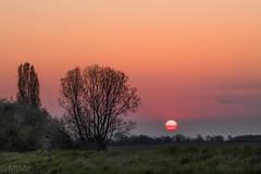 Sonnenaufgang in der Vorderpfalz (Pfalzknipser) Tags: bäume gäu landschaft lichtstimmung