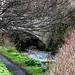 A WALK ALONG THE RIVER DODDER [ CLONSKEAGH TO MILLTOWN ]-146726