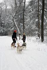 IMG_0048_AutoColor (LifeIsForEnjoying) Tags: snow mushing dog sledding dogs snowboard sled sitka nike kaskae