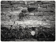 If these walls could talk... #wall #muur #history #historie #blackandwhite #blacknwhite #bnw #bw #bws #noir #monochrome #zwartwit #bnwphotography #colorless #lovephotography #photographer #photography #fotograaf #fotografie #outside #travel (Chantal vander Reijden) Tags: colorless blacknwhite zwartwit bnw history lovephotography fotografie fotograaf blackandwhite bw muur outside monochrome noir bnwphotography photographer travel wall historie photography bws