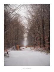 Lage Vuursche (http://www.paradoxdesign.nl) Tags: lage vuursche winter utrecht nederland gooi holland netherlands sneeuw snow road zwarteweg nature natuur landschap landscape olympus omd em10 mark iii micro 43 four thirds