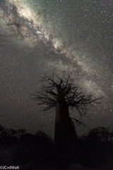 """Stars above Kubu Island • <a style=""""font-size:0.8em;"""" href=""""http://www.flickr.com/photos/94652897@N07/32043910527/"""" target=""""_blank"""">View on Flickr</a>"""
