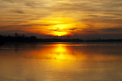 Sunset and birds flying in the lake (Lux Populi) Tags: sun sunset lake water vegetation nature landscape backlighting silhouettes sky reflexes birds horizon
