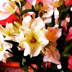 Fun with filters. #Takoma #dc #dclife #washingtondc #iphone #iPhonemacro #macro  #flower #flowersofinstagram (Kindle Girl) Tags: iphone takoma dc dclife washingtondc iphonemacro macro flower flowersofinstagram