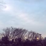 このうすらぼんやりした感じが春っぽいな〜〜 thumbnail