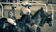 DSC_0880 (fullerton42) Tags: straftford racecourse stratfordracecourse horse horses racehorse horseracing race punter punters specatators sport equine england