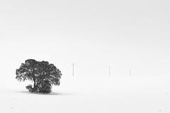 White World (DavidFrutos) Tags: davidfrutosegea barranda murcia canondslr 5dmarkii canon70200mm árbol cold frío snow nieve field campo tree planta monochrome blackwhite bn bw landscape paisaje nature naturaleza fineart ambiance winter invierno minimalismo minimalism minimal minimalistic