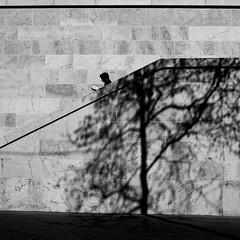 The open book (pascalcolin1) Tags: paris13 homme man livre book escalier steps mur wall arbre tree ombre shadow stairwell photoderue streetview urbanarte noiretblanc blackandwhite photopascalcolin 50mm canon50mm canon