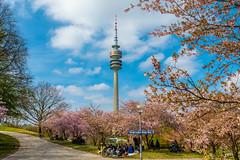 Olympiapark im Frühling (Muenocchio) Tags: munich olympiapark spring frühling münchen