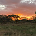 Sunset in Tarangire
