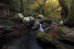 La Sauceda (Fran-Garrido) Tags: nikon d750 paisajes irix15mmf24 lasauceda qdd malaka cortésdelafrontera río agua rocas bosque losalcornocales fb 500px