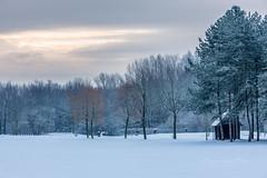 Wintermorning (Harold van den Berge) Tags: axel bomen clouds frost haroldvandenberge landscape landschap lucht netherlands outdoor sky sneeuw snow sunrise tree winter wolken zeeland zeeuwsvlaanderen zonsopkomst nederland nl