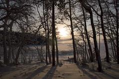 Joensuu - Finland (Sami Niemeläinen (instagram: santtujns)) Tags: joensuu suomi finland pohjoiskarjala north carelia karelia kuhasalo lake järvi frozen sunset auringinlasku talvi winter luonto nature metsä forest puu tree