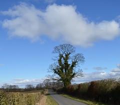 Country Lane, Near Dundonald, Ayrshire, Scotland. (Phineas Redux) Tags: countrylaneayrshirescotland scottishlandscapes scottishscenery ayrshirescotland scotland