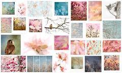 February 2019 mosaic (jeanne.marie.) Tags: myneighborhood mydailywalk february 2019 mosaic collage nature spring springtime winter