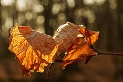 Gegenlicht (nordelch61) Tags: mönchbruch naturschutzgebiet hessen mörfeldenwalldorf wald baum bäume totholz moos