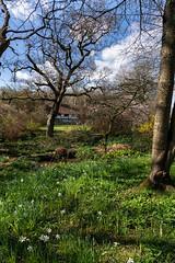 Vann Garden and House, Surrey (tonybill) Tags: march sonya7riii sonyfe24105mmf4 spring sunshine surrey vann garden