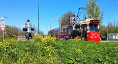 Dellûfdingdingdingdingding (Peter ( phonepics only) Eijkman) Tags: denhaag sgravenhage htm bn railwaycrossing zuidholland tram transport trams tramtracks trolley rail rails strassenbahn streetcars nederland netherlands nederlandse holland