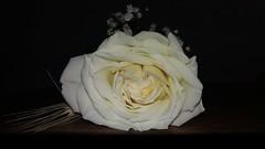 20181119_225508 (Feralysa) Tags: flor flower rosa hibisco natureza