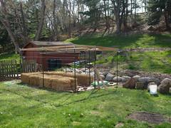 P1080026 (LPompey) Tags: garden strawbale gardening strawbalegardening