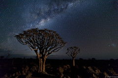 one nigth in the quever forest tree (Paco Conesa) Tags: namibia africa trees milkway quever forest canon night paco conesa