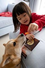DSC_0109 (Y.S. Lien) Tags: love girl child cute naughty smile childandpet pet dog taipei taiwan 愛 小孩 狗 可愛 調皮 笑容 人像 台北 台灣