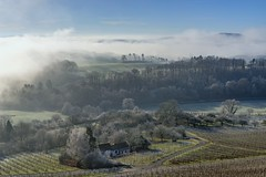 *The house on the vineyard* (Albert Wirtz @ Landscape and Nature Photography) Tags: albertwirtz wittlich wittlichersenke wittlichvalley raureif frost hoarfrost nebel fog mist misty foggy neblig brume bruma brouillard nebbia laniebla dashausamweinberg vineyard weinberg reben trauben weinbau riesling nature natur natura landscape landschaft paesaggi paysage paisaje campo campagne campagna tree baum forest wald moseleifel eifel südeifel deutschland germany allemagne rheinlandpfalz rhinelandpalatinate nikon d810 filter haidagnd09softverlauffilter grauverlauffilter