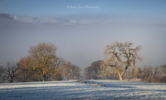 A Winters Morning (.Brian Kerr Photography.) Tags: cumbria lakedistrict landscapephotography winter snow mistymorning trees weather frosty availablelight nikon d850 formatthitech vanguarduk briankerrphotography