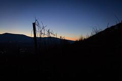 Coucher de soleil (meyer.morgane7) Tags: coucher de soleil sun night color orange obernai vigne ciel sky landscape blue alsace bas rhin mont national point vue spot soir hour canon 1200d sigma 18250