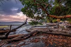 Wet west coast love (kellypettit) Tags: vancouverisland northwestcoast nanaimo island trees logs wet