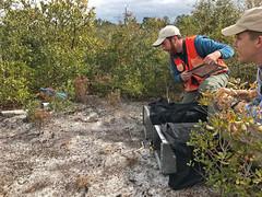 Releasing Two FL. Scrub Jays at Seminole State Forest (FWC Research) Tags: floridascrublay translocation ocalanationalforest seminolestateforest rockspringsreserve jonathandicksonstatepark scrubhabitat nonmigratory fwri fwc scrubjay birdbanding