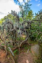 Jardín Botánico de Bogotá (joshbousel) Tags: bogotá bogotábotanicalgarden cactus colombia jardínbotánicodebogotá nature plant southamerica travel