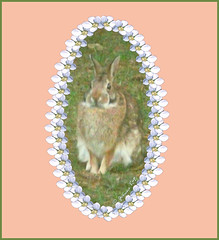 The Grand Rabbit (Yvonne Rup) Tags: bunny rabbit easterbunny spring nature yvonnerup
