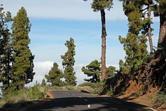 Pine trees on the way down from the crater rim (EduardMarmet) Tags: lapalma spanien esp