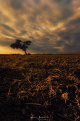 Amanece un nuevo año ... (Fran-Garrido) Tags: nikon d750 irix15mmf24 atardecer puestadesol tarde noche paisaje vertical ocaso arbol campo nubes cielo qdd malaka málaga fb tw 500px