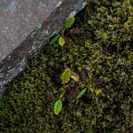 Autumn Moss - Iceland thumbnail
