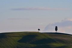 Tuscan skyline (Antonio Cinotti ) Tags: landscape paesaggio toscana tuscany italy italia siena hills colline campagnatoscana cretesenesi asciano nikon nikond500 d500 tamron tamron150600 cypress rollinghills