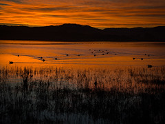 Morning Swim, Point Reyes National Park_ (Basak Prince Photography) Tags: nationalpark places pointreyes centralcoast color ducks mountains nationalparks northcoast orange pacificcoasthighway red silhouette sunrise winter