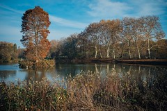 Autumn Ends (Tom Levold (www.levold.de/photosphere)) Tags: autumn bäume fuji herbst landscape landschaft natur nature pond teich trees x100f