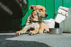 _MG_5381 (waychen_c) Tags: taiwan kaohsiung kaohsiungcity gushan gushandistrict dog cityscape urban 台灣 高雄 高雄市 鼓山 鼓山區 犬 イヌ 狗