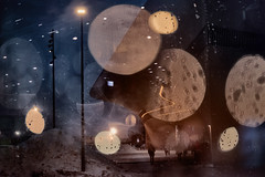 Varied Metre (pni) Tags: homunculi night light glass stg water drop through human person being people oodi ode helsinginkeskustakirjasto centrumbiblioteket helsinkicentrallibrary library helsinki helsingfors finland suomi pekkanikrus skrubu pni unsharp blur focus bokeh bubble pekka nikrus