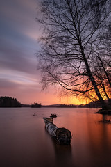 Viaredssjön (jarnasen) Tags: fuji xt20 tripod 1024mm xf1024mmf4 longexposure le nisi nd1000 lake landscape lakescape viaredssjön borås birch log sunset sun light shadows nordiclandscape nature outdoor geo geotag gallery copyright järnåsen jarnasen smooth color colourful clouds sandared