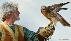 DSC_0071_Falconiere (orsapolaris54) Tags: portrait falconer falcon bird birdphotography man plumage beak eyes gestures uccello scene festival italy city falco falconiere nikonphotography