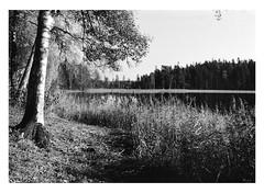 Hackarp, Sverige (holtelars) Tags: asahi pentax spotmatic sp m42 supertakumar takumar 28mm f20 film 35mm analog analogue ilford fp4 ilfordfp4 100iso d76 bw blackandwhite monochrome filmphotography filmforever ishootfilm larsholte homeprocessing jobo atl1500 leitz focomat v35 multigrade darkroom print hackarp sweden sverige morning landscape trees lake stillness forest water serene