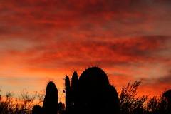 Sunset 2 16 19 #38 (Az Skies Photography) Tags: rio rico arizona az riorico rioricoaz canon eos 80d canoneos80d eos80d canon80d cloud clouds red orange yellow gold golden salmon black february 2019 sky skyline skyscape arizonasky arizonaskyline arizonaskyscape sun set sunset dusk twilight nightfall arizonasunset 16 february162019 21619 2162019 silhouette cactus prickly pear pricklypear pricklypearcactus cactussilhouette