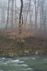Still winter (baro-nite) Tags: dukeforest trees beech fagus newhopecreek centralnorthcarolina pentax k1 smcpentax13535mm iridientdeveloper