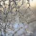 Winter's farewell:-)